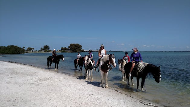 Horseback ride and swim st. Petersburg