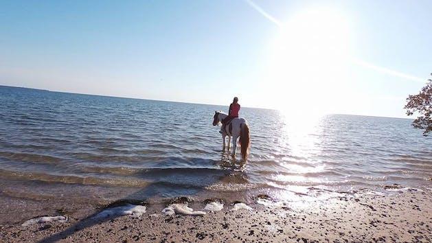 St Petersburg Sunset Beach Excursion