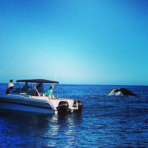 Nothing gets out of your seat faster than a whale bigger than the boat flicking its tail less than 50ft away!
