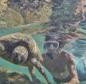 Na Pali Experience Catamaran Tour Turtle