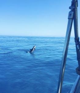 Na Pali Experience Catamaran Tour Dolphins