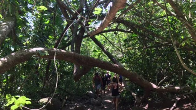 Hikers on manoa falls trail