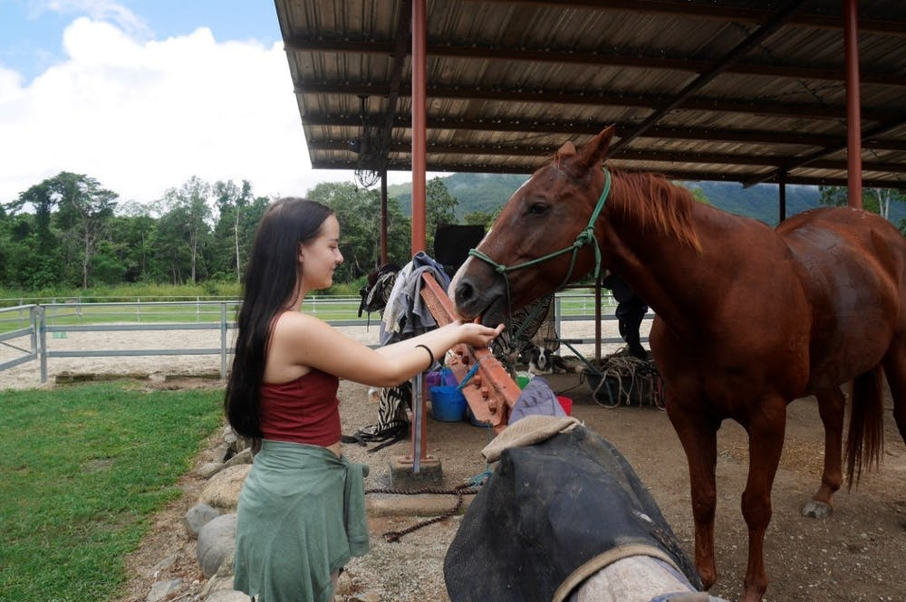 Feeding the horses in Cairns