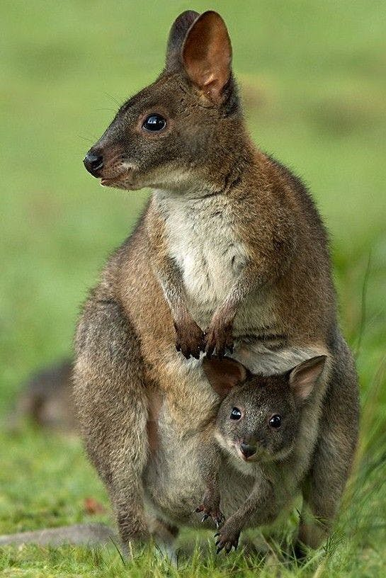Blog - 30 Iconic Aussie Animals for the Bucket List.