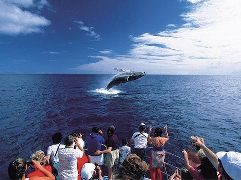 People on a boat watching Whale surface