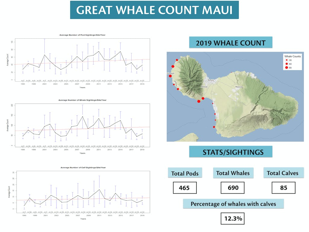 2b9f5db02d97 Previous Great Whale Counts .