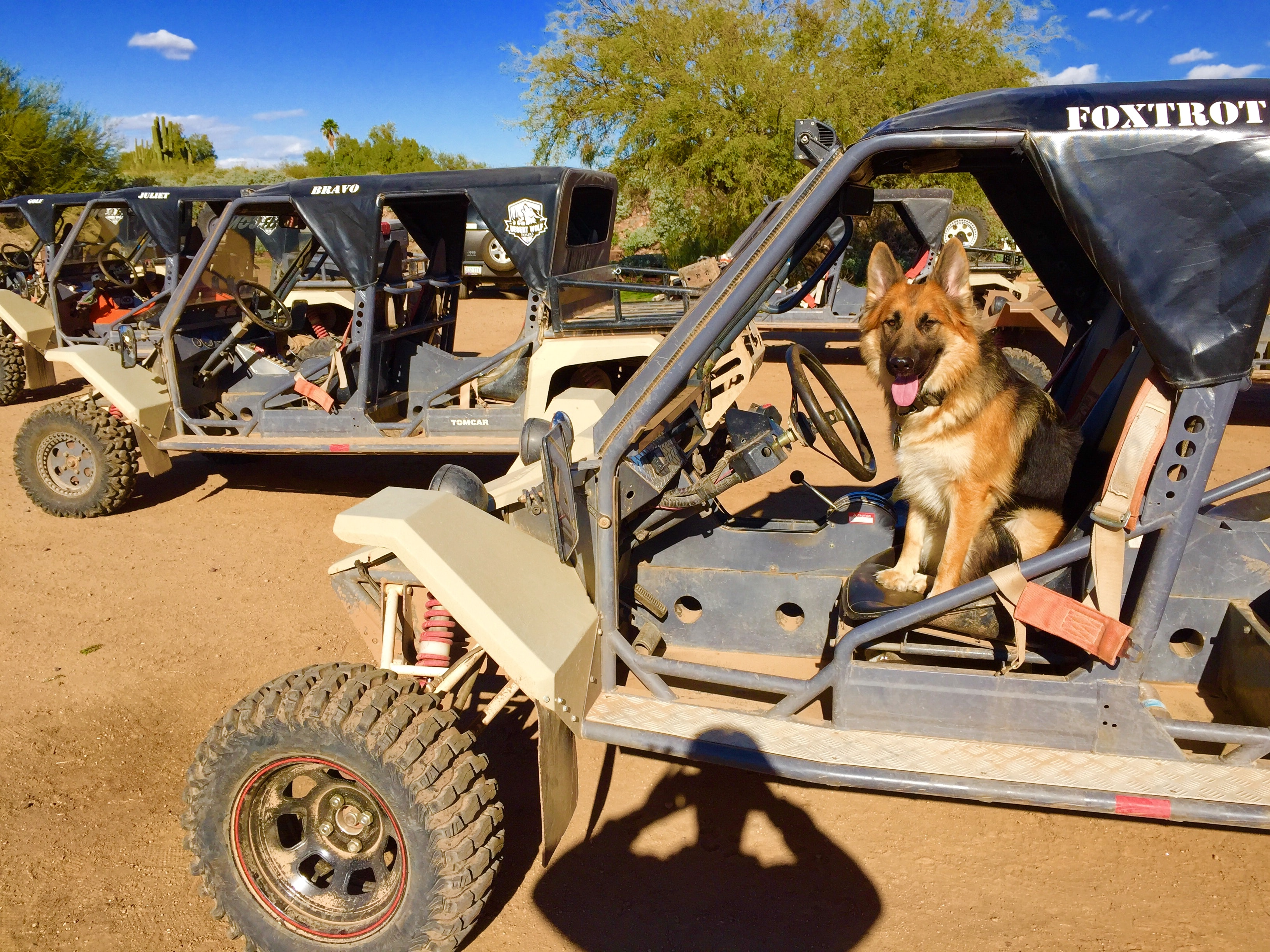 Oakley The Desert Wolf
