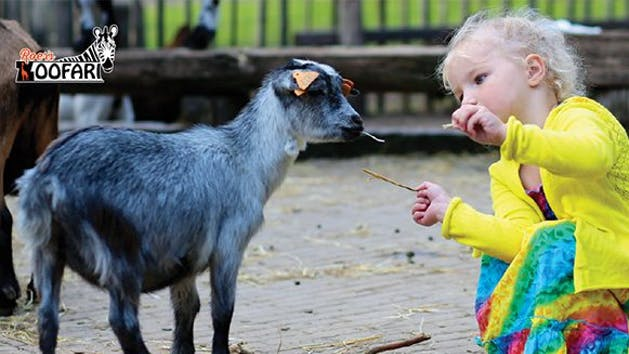 Young girl feeding a goat at Roer's Zoofari for the Easter Eggstravaganza