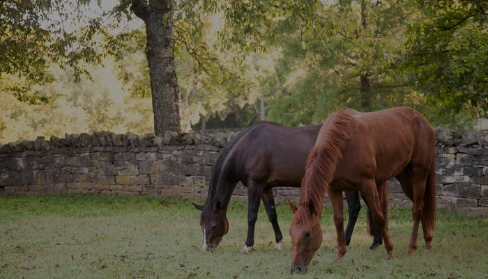 Thoroughbreds | Belle Meade Plantation
