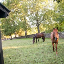 Thoroughbreds | Belle Meade Plantation