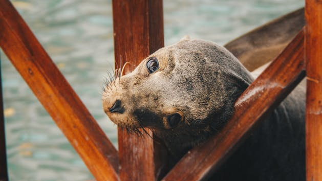 seal under a pier