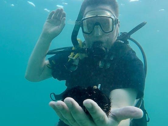 Scuba diver with a sea creature in his hand