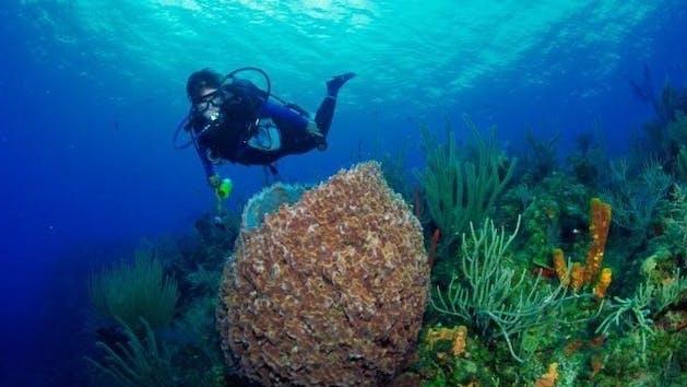 A scuba diver getting up close to aquatic life