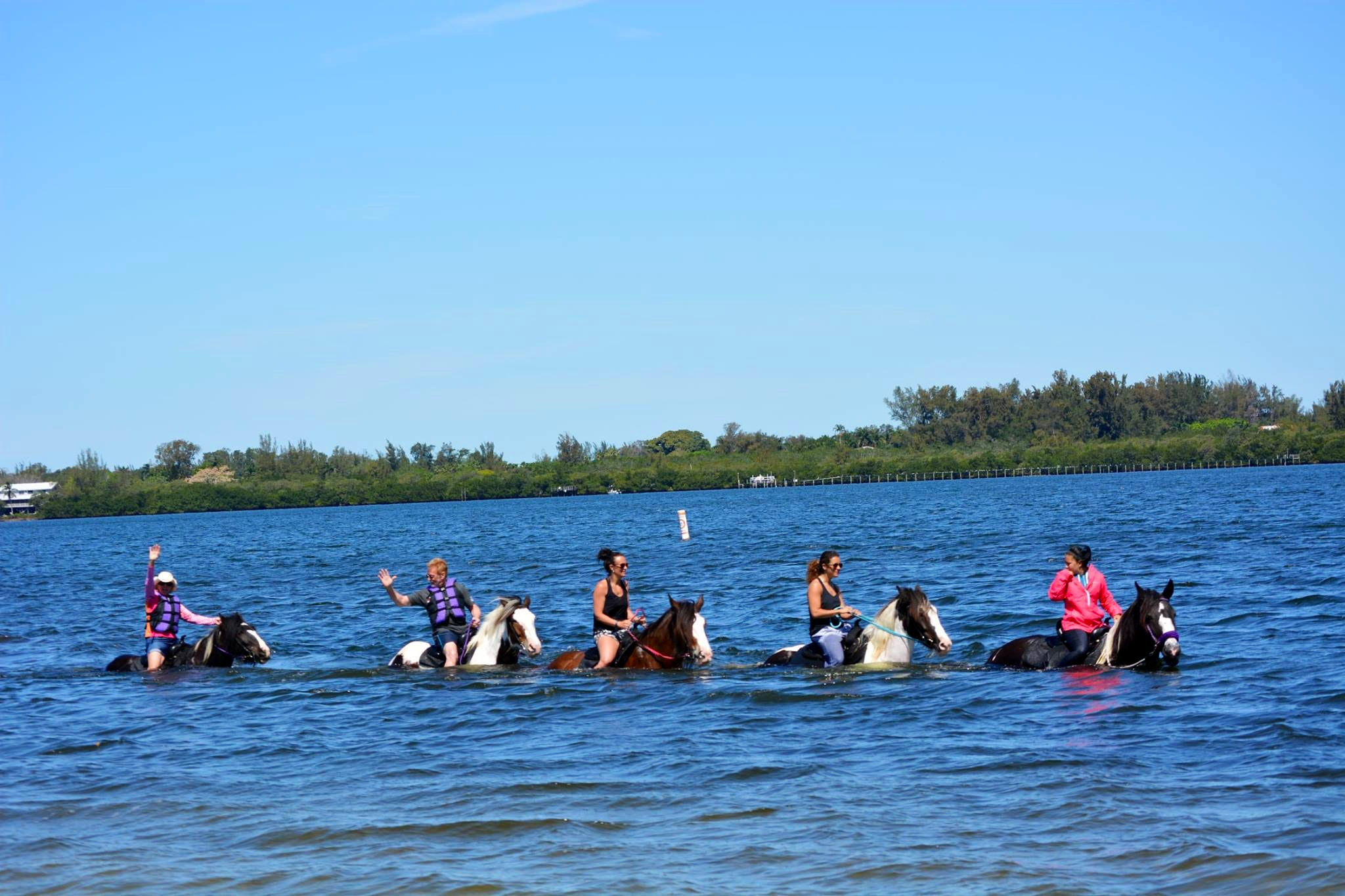 CPonies Swimming in Bradenton Florida