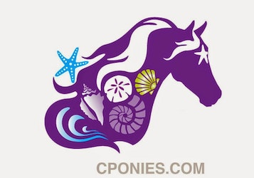 C Ponies | Bradenton and St Petersburg, Florida | Beach Horseback Riding