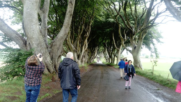 The dark hedges with people walking through them
