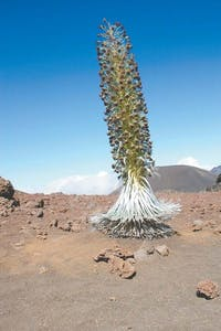 a tree with a mountain in the desert
