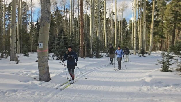 group of cross country skiers